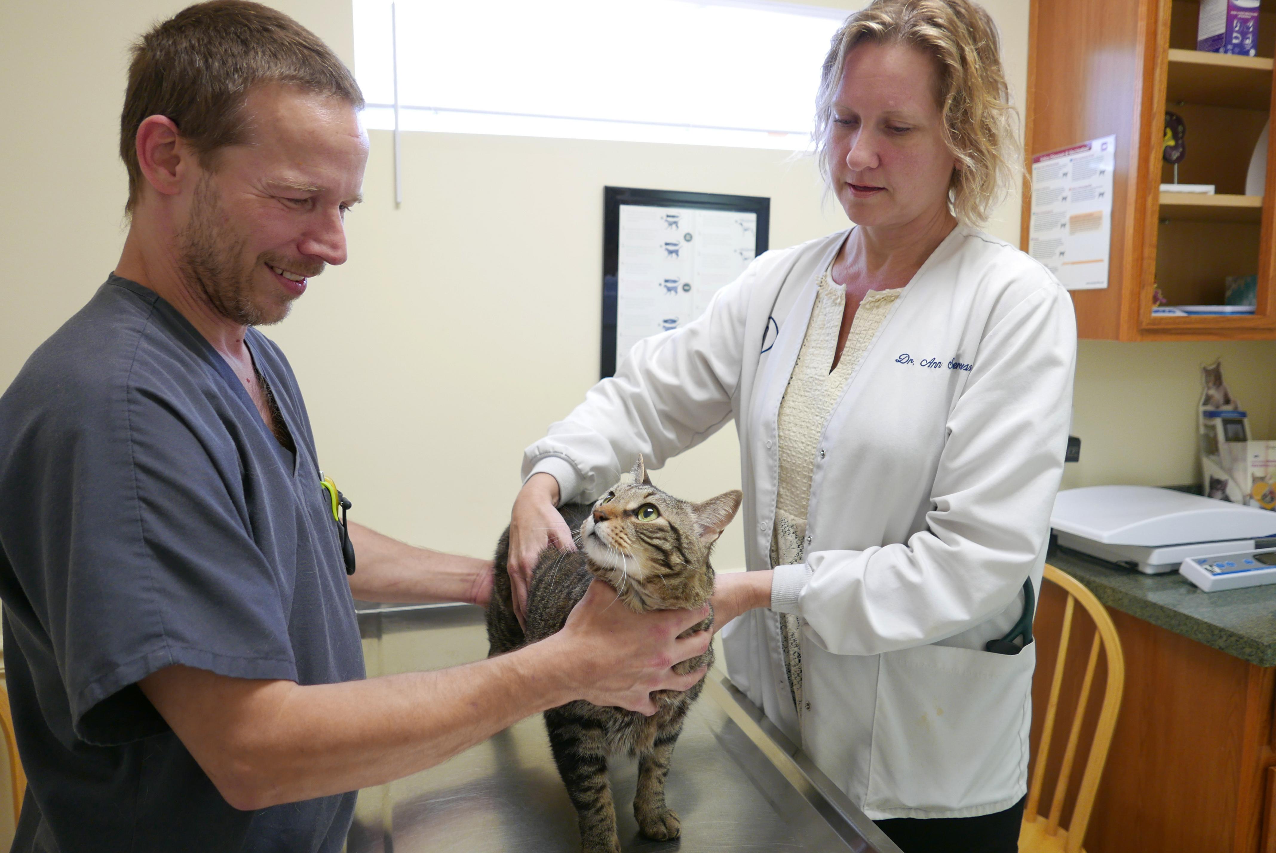 Cat Health Care | Alta Bluff Animal Hospital Jacksonville FL